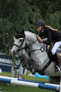 Horse for sale - LOUGH KEY DIZZY RASCAL