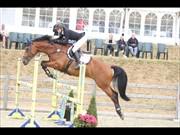 Horse for sale - HUPILOT