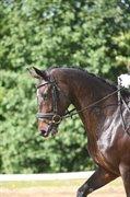 Horse for sale - ÅRSBJERGS MONTANA
