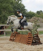 Horse for sale - PATO