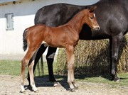 Horse for sale - Happy Hope Grønvang