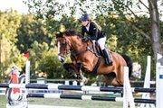 Horse for sale - CARAMINO