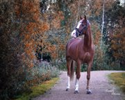 Horse for sale - ANTOS LOPUS