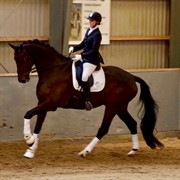 Horse for sale - ROCCET