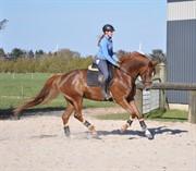 Horse for sale - Zalza