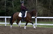Horse for sale - DM pony
