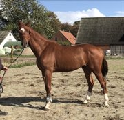Horse for sale - SE HER!
