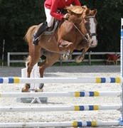 Horse for sale - TAKE A CHANCE ON ME (CHANEL)