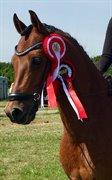 Horse for sale - SL COGNAC