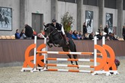 Horse for sale - CELINDO BY UNIQHORS