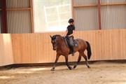 Horse for sale - ARJAN