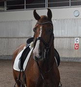 Horse for sale - ZANADU LOX