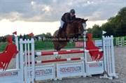 Horse for sale - SYVHØJEGÅRDS FERNANDO