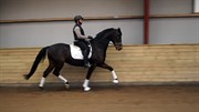 Hest til salg - ALBERT-BELL