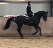 Horse for sale - TT CATJING