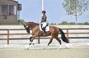 Horse for sale - LA LUEUR H