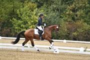 Horse for sale - SKOVLY'S FAIRYTALE