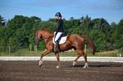 Hest til salg - DISSERE