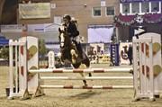 Horse for sale - KASTANIEHØJS JOANNAH