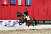 Horse for sale - AMBJERGS DELGADINO