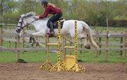 Horse for sale - NIKITA