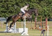 Horse for sale - BREDERO B.