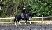 Horse for sale - KJELDALSGAARDS BEA
