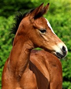 Horse for sale - Flirty Dancer