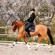 Horse for sale - Corvina