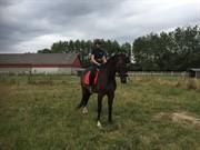 Horse for sale - D'XANDOR
