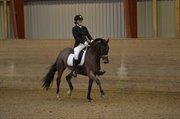 Horse for sale - Kleiner Donner 34
