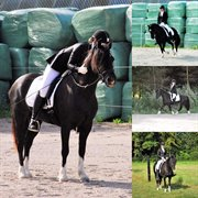 Horse for sale - Eleni Coco Chanel