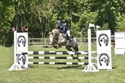Horse for sale - MR MARMADUKE