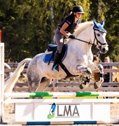 Horse for sale - Grey On