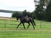 Horse for sale - KALLEMOSEGAARDS ENERGY