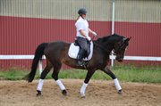 Horse for sale - CHELINA