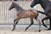 Horse for sale - LAUSANNE H