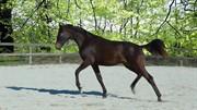 Horse for sale - KAISER CARMEN