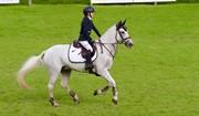 Horse for sale - MOREPARK MERVYN
