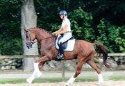 Horse for sale - Roppongi