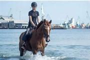 Horse for sale - LABAN UGLHOLM