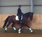 Horse for sale - KOKKEDALS FABRICE