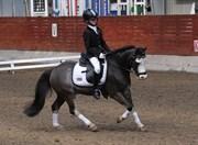 Hest til salg - MR. WHITE HEAD