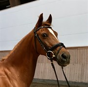 Hest til salg - AMBER