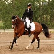 Horse for sale - KABRITS ELISIA