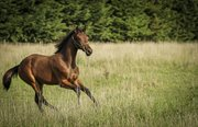 Horse for sale - GRANDALS FABIA