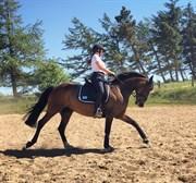 Horse for sale - SARI