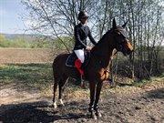 Horse for sale - Pochvalnaja-drum van het juxschot