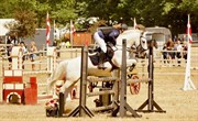 Horse for sale - CLEMENTS SPOOK