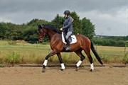 Horse for sale - JASON VG